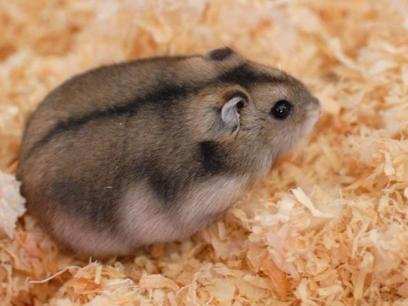 hamster-boarding-aberdeenshire