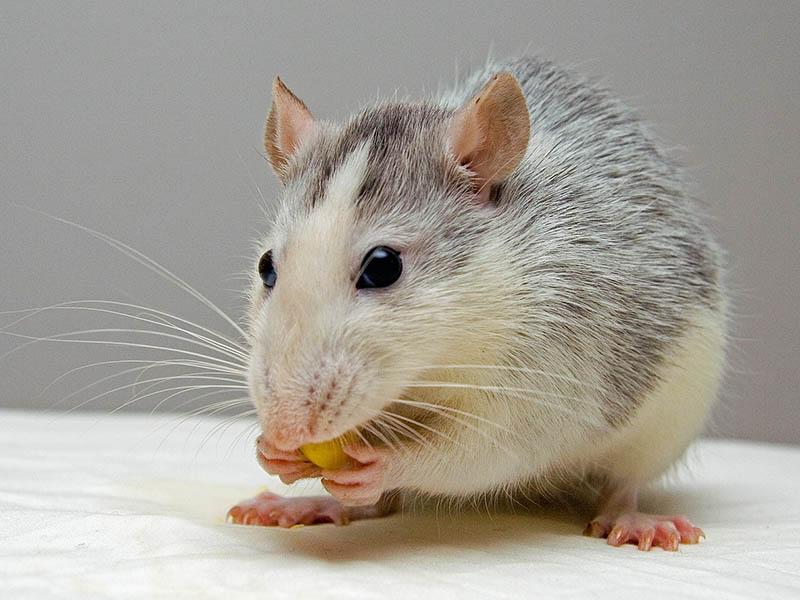 rat-boarding-aberdeenshire